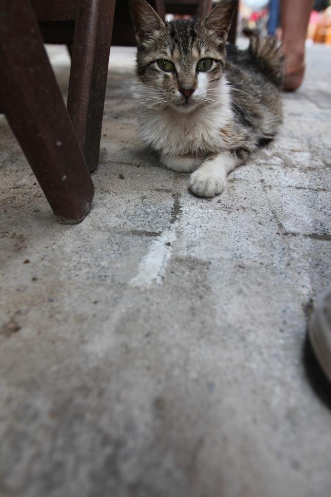 Stray Island Cats