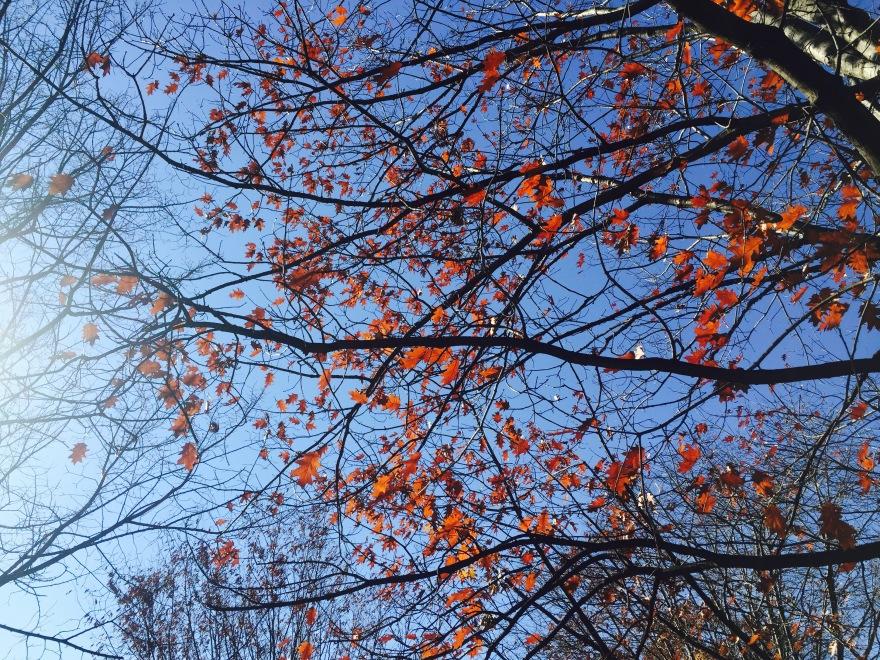 Bold Leaves